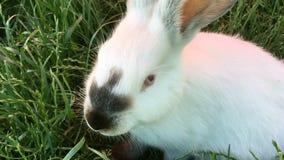 Piękny młody mały królik na zielonej trawie w letnim dniu zbiory wideo