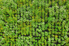 Piękny mały kwiatu tło z zielonymi liśćmi Fotografia Stock