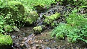Piękny mały strumyk i kamienie z zielonym mech zbiory