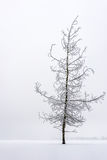 Piękny marznący drzewo Zdjęcia Stock