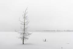 Piękny marznący drzewo Zdjęcia Royalty Free