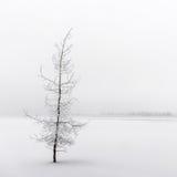 Piękny marznący drzewo Fotografia Royalty Free