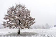 Piękny marznący drzewo Fotografia Stock