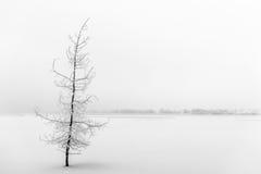 Piękny marznący drzewo Zdjęcie Royalty Free