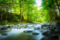 Piękny marzycielski halny strumień w lasowy Piękny marzycielskim Zdjęcie Royalty Free