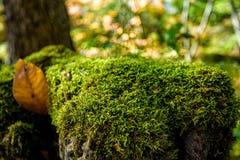 Piękny mech i liszaj zakrywający kamień outdoors fotografia royalty free