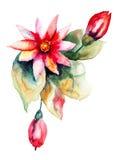 Piękny menchia kwiat Fotografia Stock