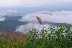 Piękny mgłowy zdjęcia stock