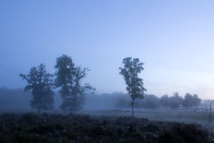 Piękny mgłowy ranek Obraz Stock