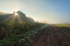 Piękny mgłowy ranek na zewnątrz miasta w lecie Obrazy Royalty Free