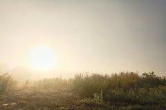 Piękny mgłowy ranek na zewnątrz miasta w lecie Zdjęcie Stock
