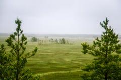 Piękny mire krajobraz w Finlandia - marzycielskim, mgłowy spojrzenie obraz stock