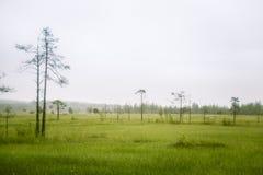 Piękny mire krajobraz w Finlandia - marzycielskim, mgłowy spojrzenie fotografia stock