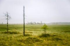 Piękny mire krajobraz w Finlandia - marzycielskim, mgłowy spojrzenie obraz royalty free