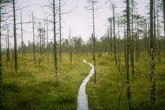 Piękny mire krajobraz w Finlandia - marzycielskim, mgłowy spojrzenie zdjęcie royalty free