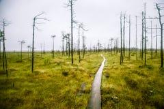 Piękny mire krajobraz w Finlandia - marzycielskim, mgłowy spojrzenie fotografia royalty free