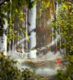 Piękny mistyczny tło fotografii montaż z brzoza gajem Obraz Royalty Free