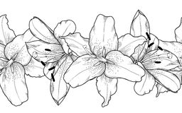 Piękny monochrom, czarny i biały bezszwowy horyzontalny ramowy element szara leluja kwitnie ilustracja wektor