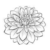 Piękny monochromatyczny czarny i biały dalia kwiat odizolowywający na białym tle Obrazy Stock