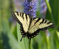 piękny motyl zdjęcie stock