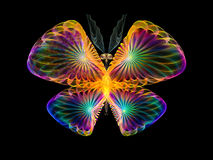 Piękny motyl Zdjęcia Stock