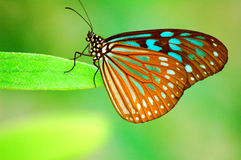 piękny motyl obrazy royalty free