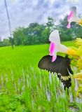 Piękny motyl obraz royalty free