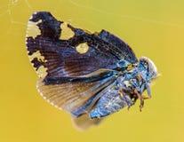 Piękny motyl jest złym szczęsliwym góry włóknem obrazy royalty free