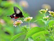 piękny motyli kwiat fotografia stock