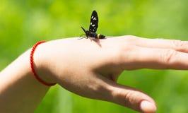 Piękny motyli obsiadanie na ręki greenfield tle fotografia stock