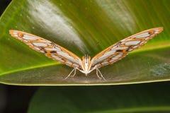 piękny motyli zbliżenie Zdjęcie Stock
