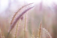 Piękny natura krajobraz - Alpejska łąka Trawy zbliżenie z sunbeams Piękny natura krajobraz z słońce racą Rocznik Sepiowy Zdjęcie Stock