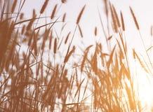 Piękny natura krajobraz - Alpejska łąka Trawy zbliżenie z sunbeams Piękny natura krajobraz z słońce racą Rocznik Sepiowy Obraz Royalty Free