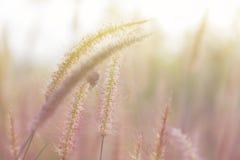 Piękny natura krajobraz - Alpejska łąka Trawy zbliżenie z sunbeams Piękny natura krajobraz z słońce racą Rocznik Sepiowy Zdjęcie Royalty Free