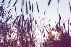 Piękny natura krajobraz - Alpejska łąka Trawy zbliżenie z sunbeams Piękny natura krajobraz z słońce racą Rocznik Sepiowy Zdjęcia Royalty Free