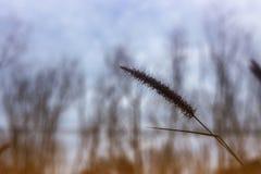 Piękny natura krajobraz - Alpejska łąka Trawy zbliżenie z sunbeams Piękny natura krajobraz z słońce racą Rocznik Sepiowy Fotografia Royalty Free