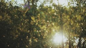 Piękny natura krajobraz w lesie przy wiosną Słońce promienie błyszczy przez liści, ulistnienie zbiory wideo