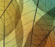 Piękny naturalny tło liści koścowie na przejrzystym zdjęcia stock
