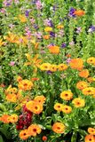 Piękny naturalny tło z jaskrawymi żółtymi kwiatami Fotografia Stock