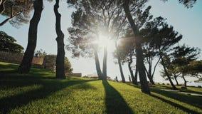 Piękny naturalny zielony światła słonecznego bokeh tło Rozmyty świeży lata ulistnienie klonowi drzewa w backlight zmierzch zbiory wideo