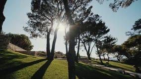 Piękny naturalny zielony światła słonecznego bokeh tło Rozmyty świeży lata ulistnienie klonowi drzewa w backlight zmierzch zbiory