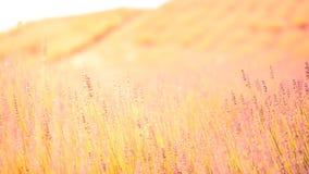 Piękny natury tła pojęcia projekt Zdjęcia Stock