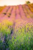 Piękny natury tła pojęcia projekt Obrazy Royalty Free