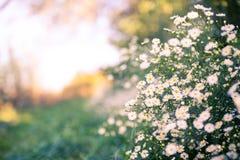 Piękny natury tła pojęcia projekt Zdjęcie Stock