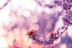 Piękny natury tła pojęcia projekt Obraz Stock