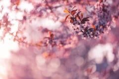 Piękny natury tła pojęcia projekt Fotografia Royalty Free