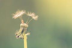 Piękny natury tła pojęcia projekt Fotografia Stock
