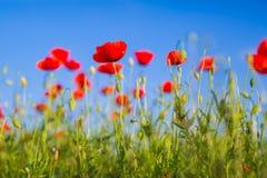 Piękny natury tła pojęcie Zdjęcie Royalty Free