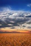 Piękny natury tło z niebem i zbożami obrazy royalty free