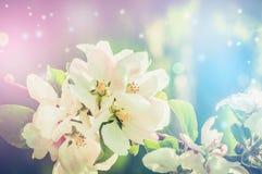 Piękny natury tło z wiosny bokeh i okwitnięciem Zdjęcie Stock